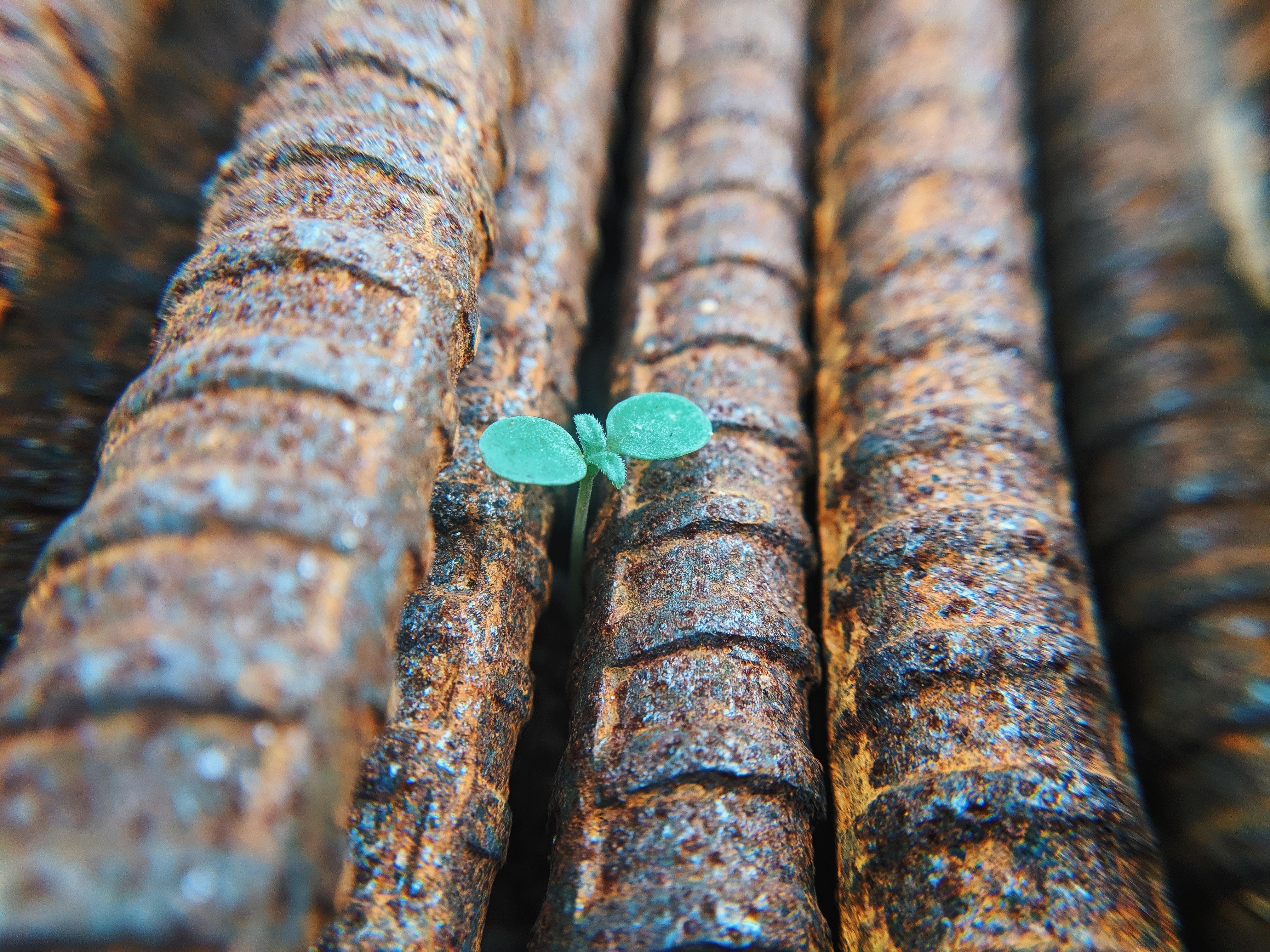 seedling-in-irons-unsplash